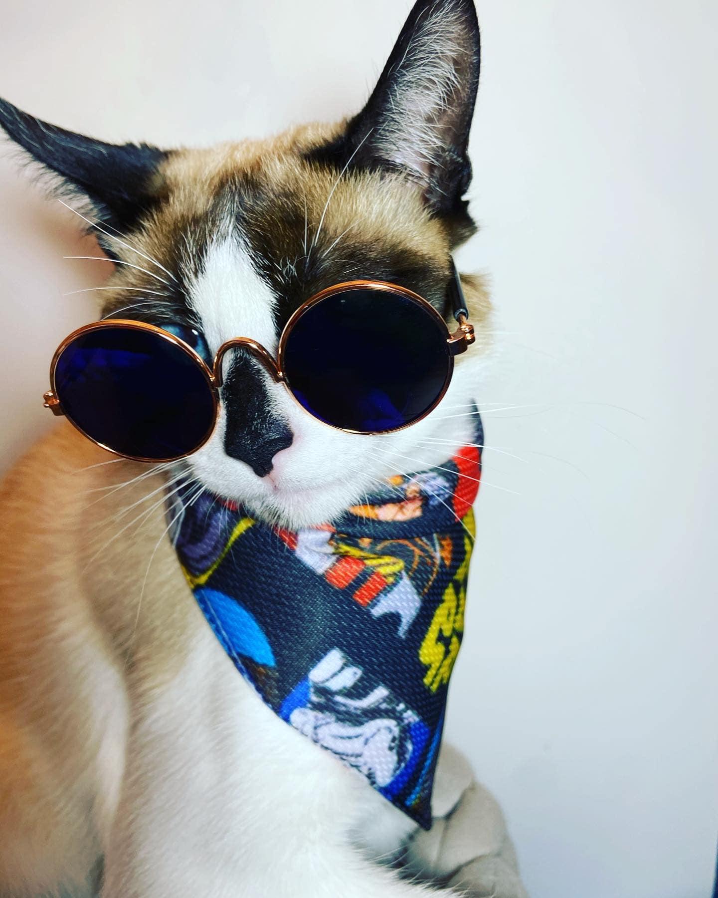 PET couture neck snaps